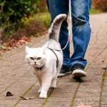 Pasivaikščiojimai su kate – pataria veterinarijos klinika